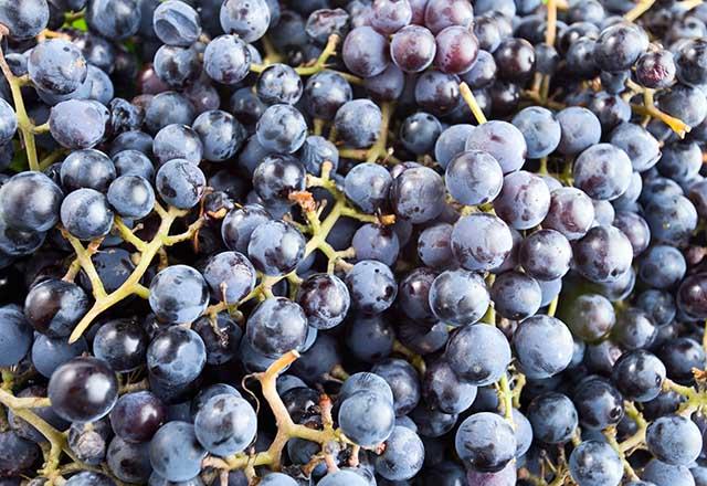 Kokulu üzüm nedir ve faydaları nelerdir?